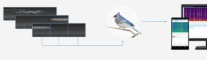 Identifier les oiseaux par leurs chants